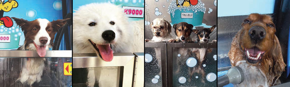 buy mobile dog wash equipment